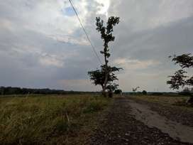 Tanah Sawah  cocok buat perkebunan