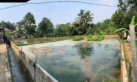 Tanah Strategis di Bogor Cocok untuk Usaha Perikanan dan Perkebunan