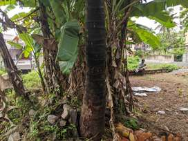 Residential Land for sale at Vanjiyur, Trivandrum