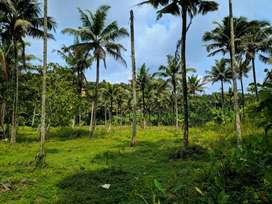 65 cents plot for Sale near MG University! Per cent! Price negotiable