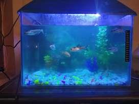 1.5 feet Aquarium with cover
