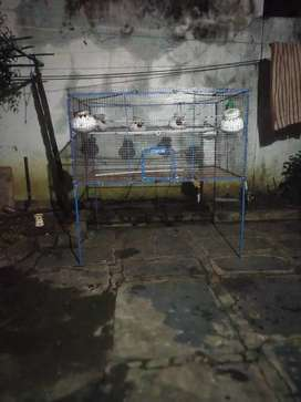 Love birds emty cage for sell