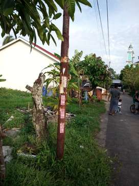 Dijual Cepat tanah Jalan Tebu Gang Lestari. Dekat Masjid. Siap bangun.