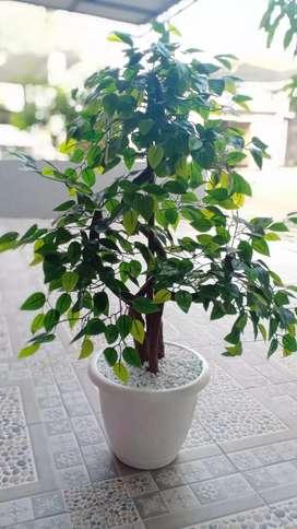 Pohon sintesis(bukan asli ya)
