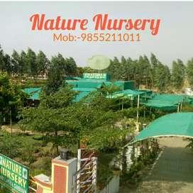 Nursery and land