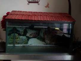 Fish Tank with roof lead