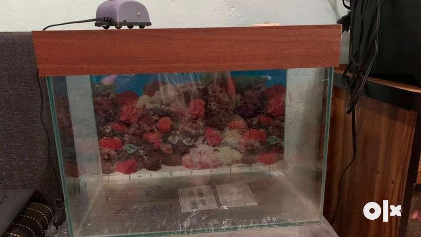 1 foot aquarium
