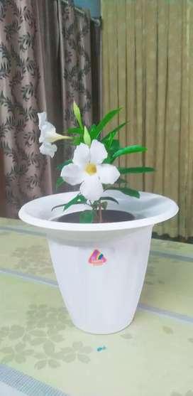 Ummiyaaazzz Plant Boutique
