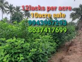 Vivasayam boomi/Agricultural land/Agriculture/Agriland/Coconut farm