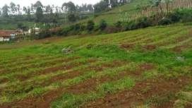 DiJual Tanah Untuk Perkebunan cocok untuk Villa/Rumah