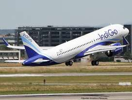 APPLY! JOB  IN INDIGO AIRLINES  HIGH  PAID   SALARY PACKAGE