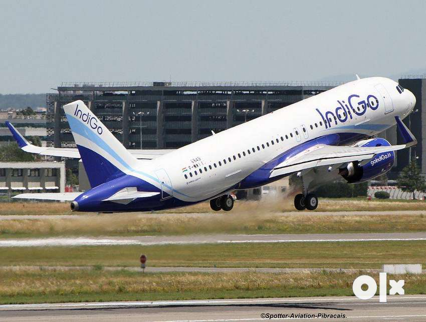 APPLY! JOB  IN INDIGO AIRLINES  HIGH  PAID   SALARY PACKAGE 0