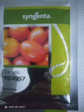 1057 and 1359 tomato seed by syngenta