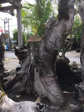 Batang antik kayu jati