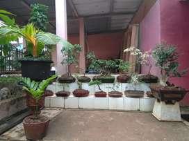 BONSAI Berbagai tanaman 25 Pot