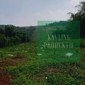 Super Mantul, Kavling Kebun Buah Area Pedesaan, Nuansa Islami