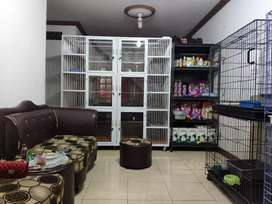 Penitipan kucing kitten adult persia domestik