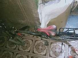 cycle company panta