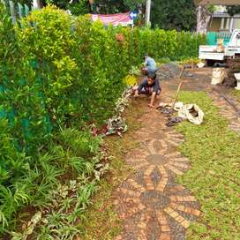 Jasa penanaman rumput relip minimalis saung