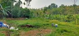 5Cent 10 cent Original Residential Plot Salecin Malayidom Thuruth