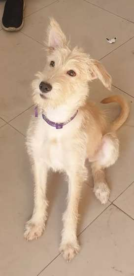 Female 5 month old fully vaccinated.