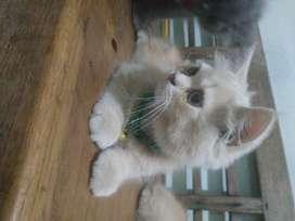 persia 2,5bln cuteeeeeesss