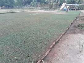 Tukan Rumput Luwu Palopo
