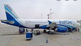 Indigo airlines job open urgent hiring