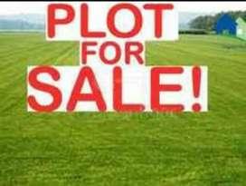 20*50 & 60*50 plot free hold Ashok nagar