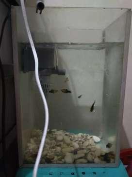 Aquarium + Filter + Ikan Lengkap
