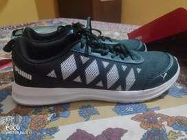 Puma Shoe_green and white combination