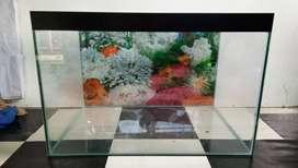 Aquarium kondisi dijamin rapi