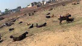 Dhandara road pine city