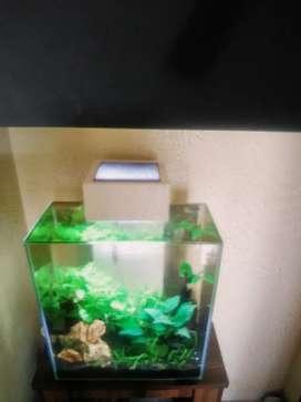 Fluval Edge aquarium 12 Gallon - Resale