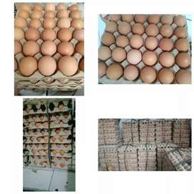 Jual Telur Ayam Lokal
