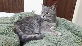 8 months olf female kitty for sale
