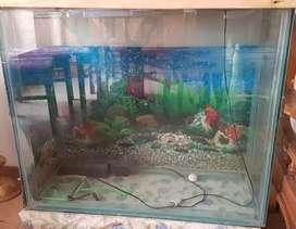Large aquarium for sale with stones
