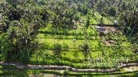Dijual Tanah MURAH Di Abiansemal Badung View Cantik Dekat Green School