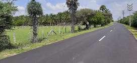 Agricultural land/ Agriland/ Coconut farm/ Farm land/ Farm house