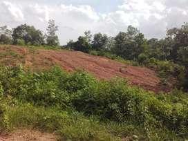 Tanah Dijual, di Muaro Pijoan Jambi