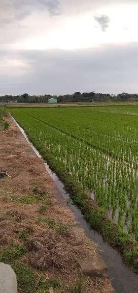 Jual tanah sukoharjo
