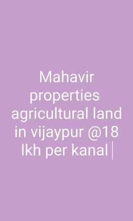 agricultural land  for sale in vijaypur 12 kanal