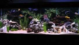 Chichlid and Monster Fish Aquarium Set-Up