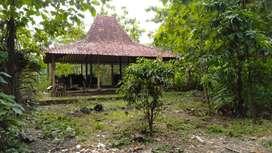 Disewakan tanah dekan Bandara Yogyakarta International Airport