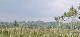 Tanah Pekarangan murah candi Borobudur