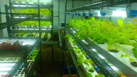 hydroponic plant setup for sale