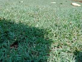 Rumput babat golf