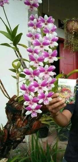 Pupuk Organik Tanaman Bunga-Hias