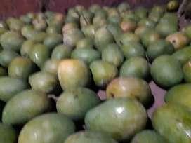Organic Ratnagiri hapus