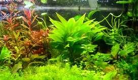Macro and micro Nutrients for planted Aquarium (250+250ml)